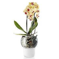 Self Watering Orchid Pot