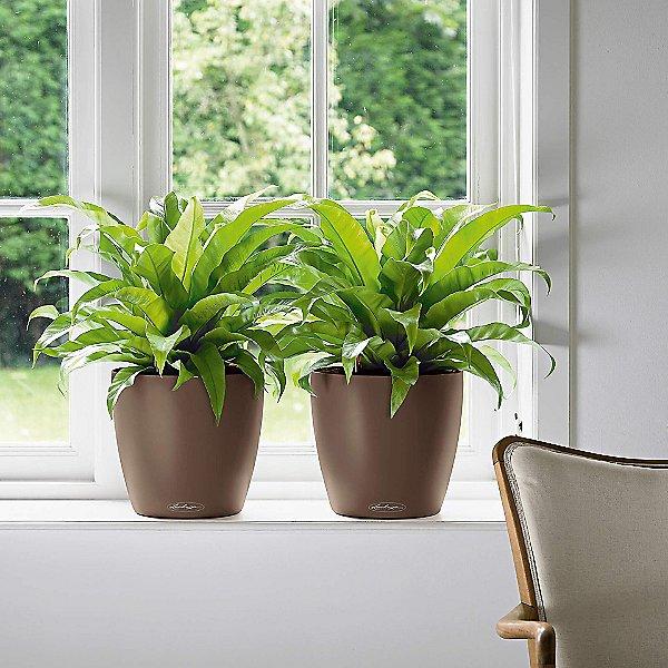 Classico Color Self-Watering Indoor/Outdoor Planter